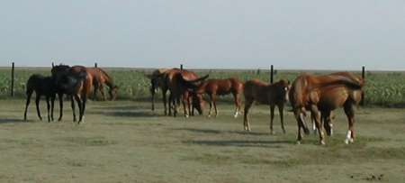 mares and foals in colby kansas