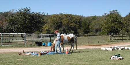 horse walking over tarp
