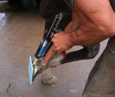 Farrier injecting silicone gel directly between hoof and pad