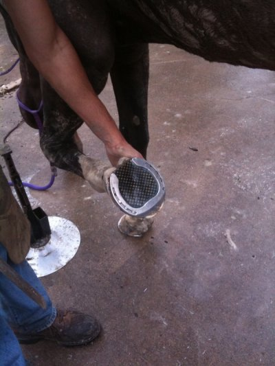 Mesh pad for thin flat soled horse
