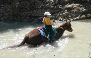 Child swimming with horse