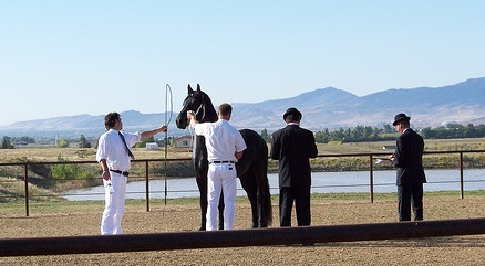 Friesian keuring inspection process