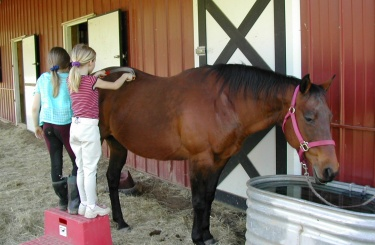 girls brushing horse