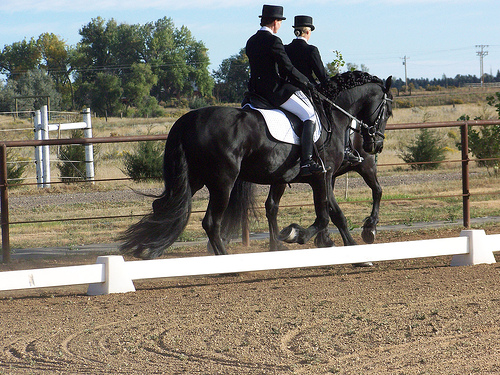 Riding friesians