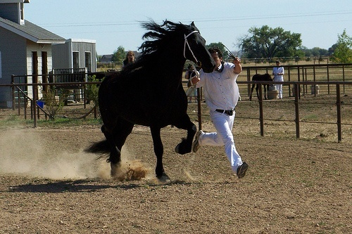 Trotting Friesian horse