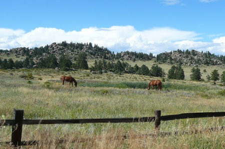 Common Types Of Horse Farm Fence Five Star Ranch
